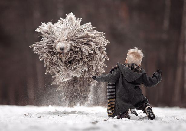 djali dhe qeni